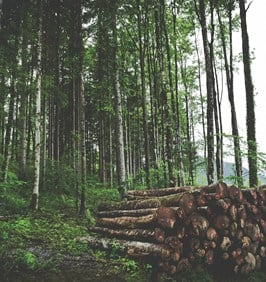 Logging Materials in Forest