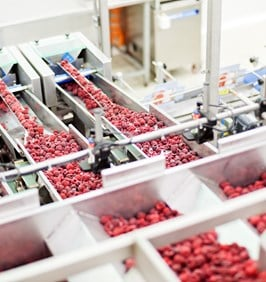 Berries at Food Processing Plant